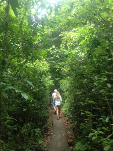 Trekking through in search of monkeys.