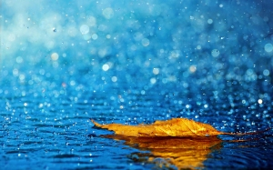 rain-hd-wallpapers