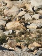 My marmot buddy